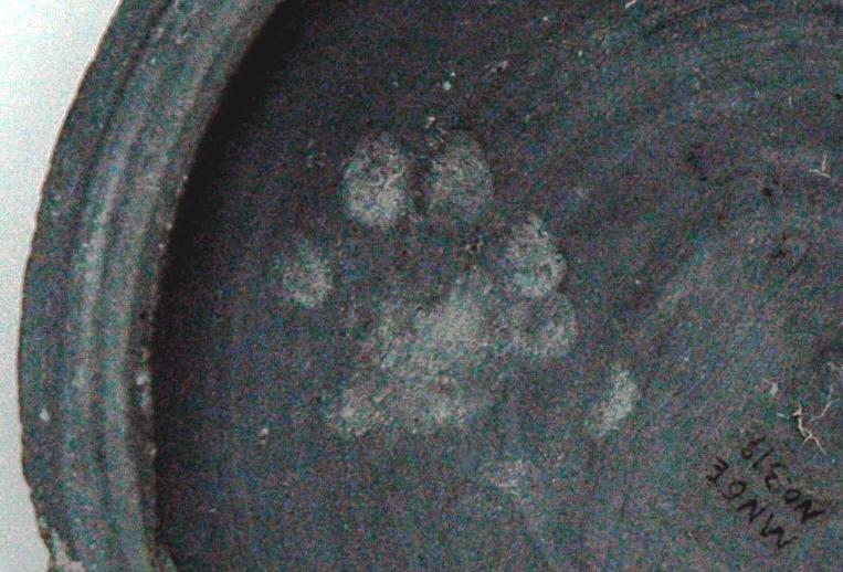日本最古の猫の足跡