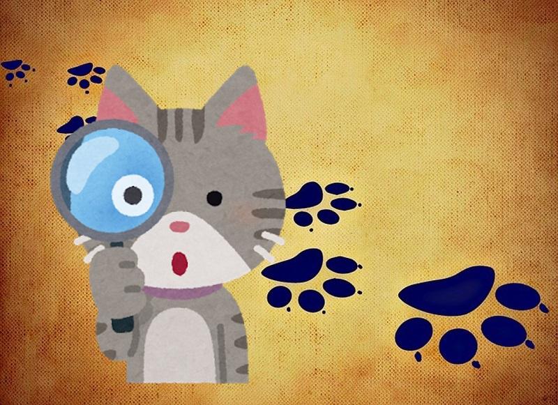猫の足跡を発見