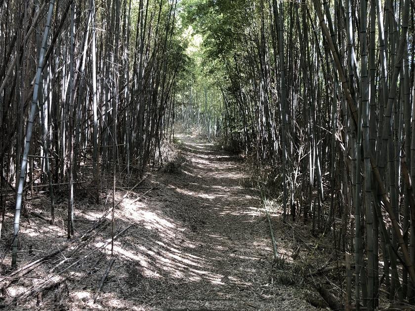 木漏れ日がさす竹林