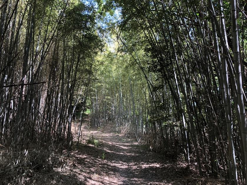 海風の竹林