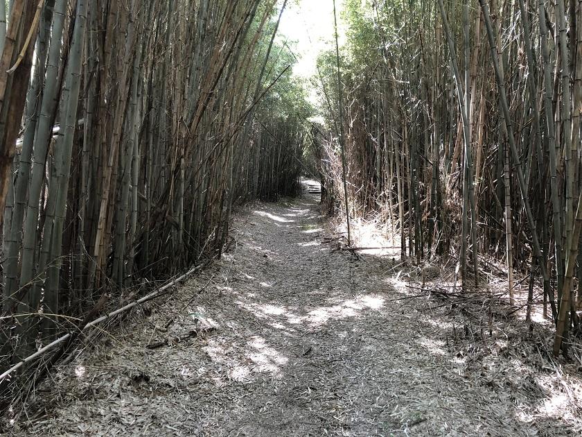 整備された竹林