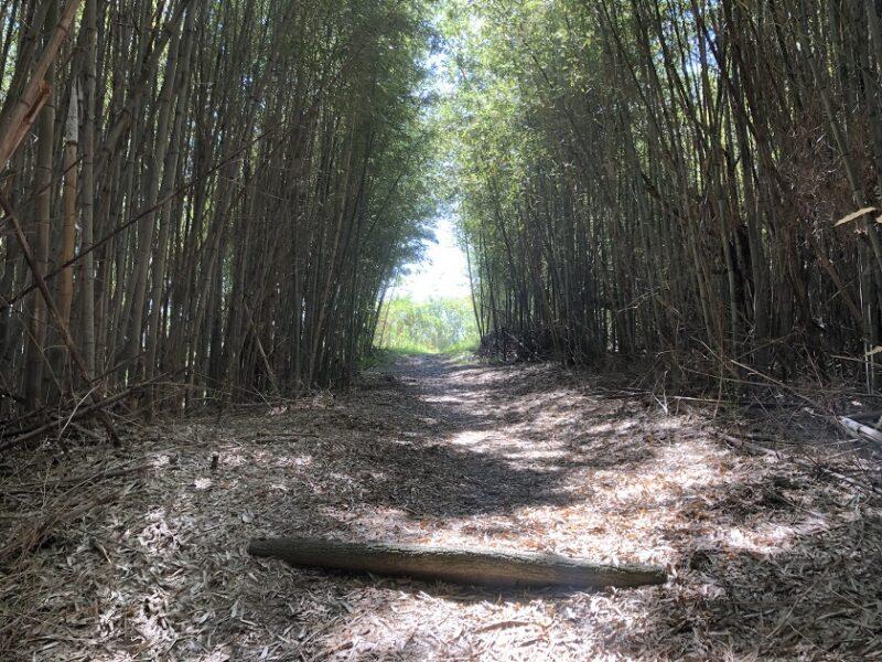 小赤壁公園の竹林