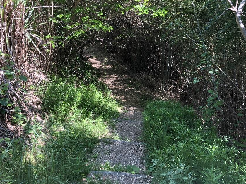 小赤壁公園の山道