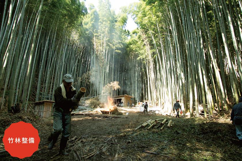 整備されている竹林