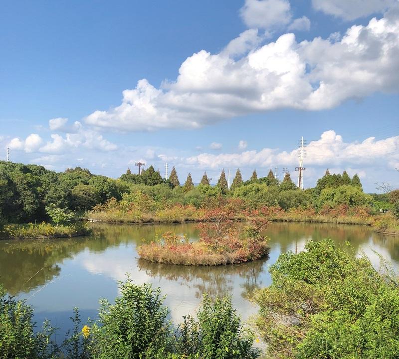 市川野鳥観察所の池