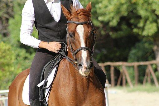 馬に乗った紳士