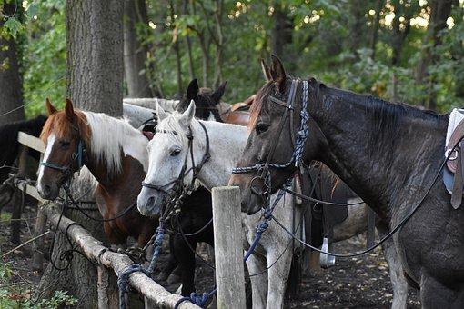 柵につながれた馬