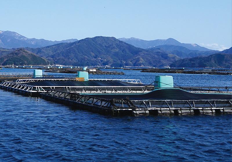 養殖漁業の生けす