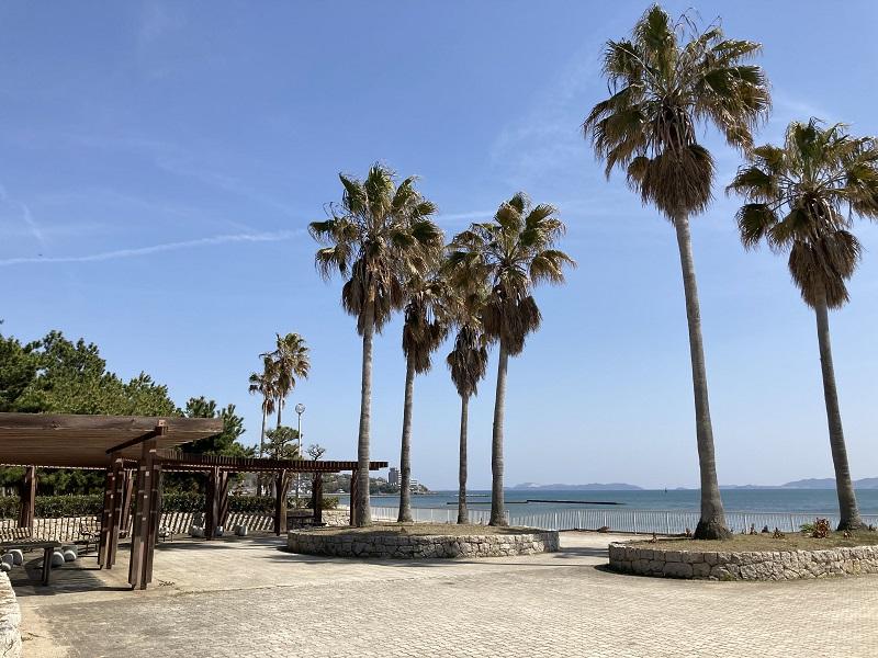 潮の門のヤシの木とベンチ