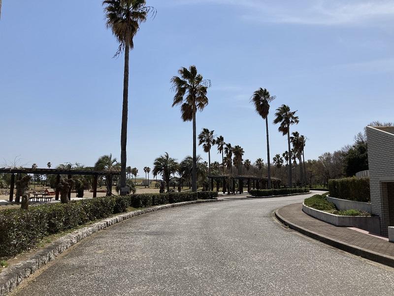 赤穂海浜公園のヤシの木