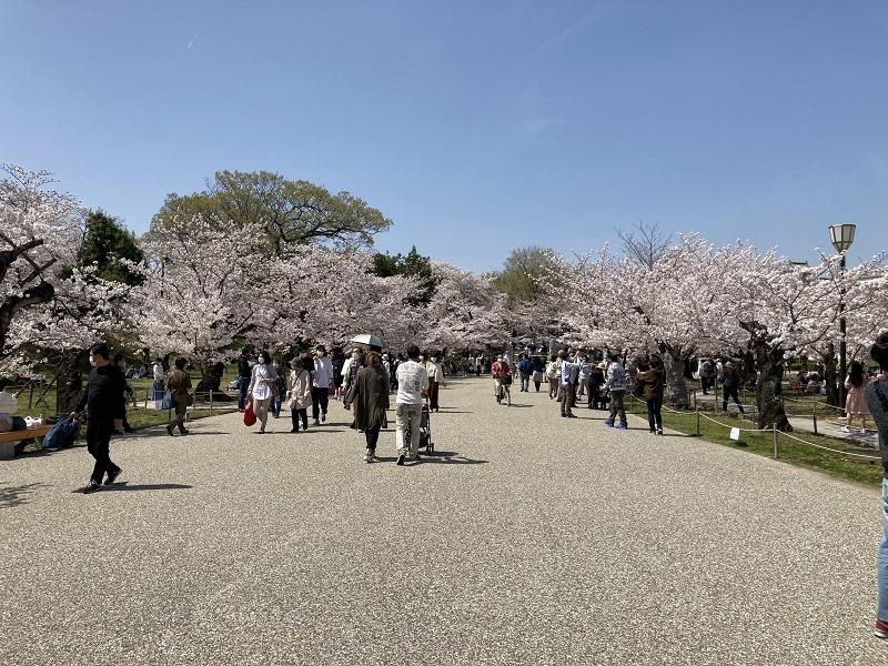 三の丸広場の桜並木