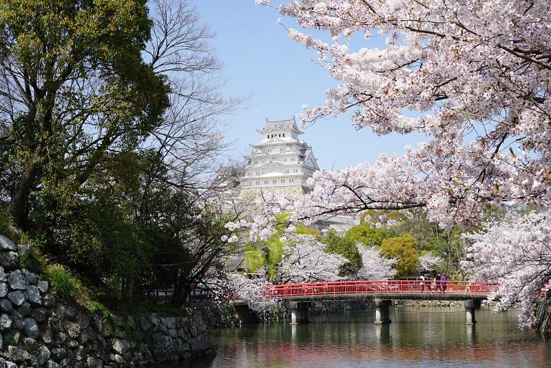 姫路城と桜の写真