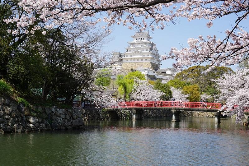 姫路城と桜の写真 赤い橋