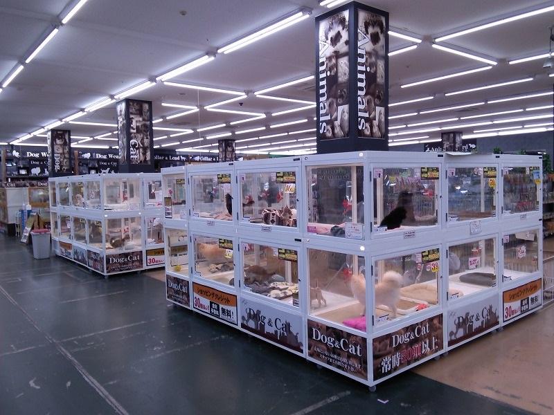 ムサシ姫路店のペットショップ