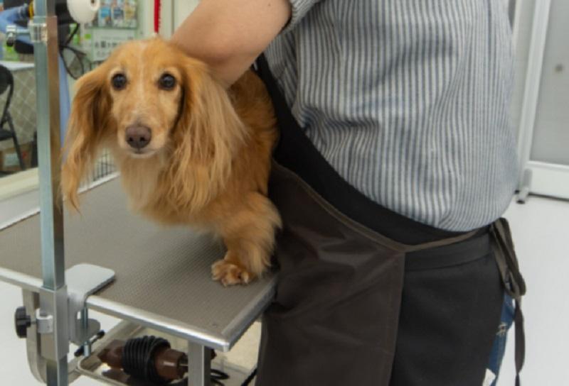 ムサシ姫路店のペットショップで犬のトリミング
